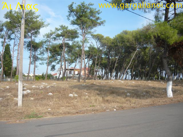 Pine trees gone 2